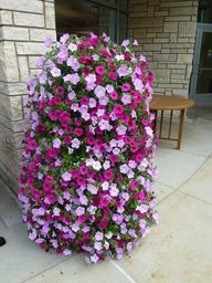 Petunia. Suurin, näyttävin kukin kukkiva aurinkoisen paikan kukka. Runsaasti värivaihtoehtoja.