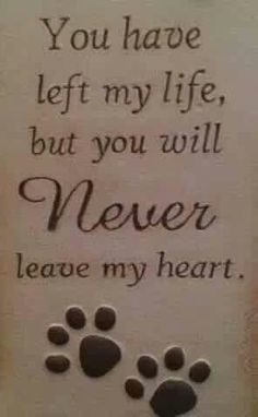You have left my life, but you will NEVER leave my heart - RIP all of my beloved cats who have gone to the Rainbow Bridge! All Dogs, I Love Dogs, Puppy Love, Yorkies, Chihuahuas, Cotton De Tulear, Pet Loss Grief, Loss Of Pet, Pet Sitter