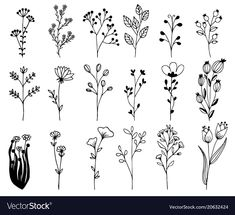 Hand drawn design elements flowers branches vector image on VectorStock Botanical Line Drawing, Floral Drawing, Motif Floral, Arte Floral, Floral Design, Doodle Designs, Designs To Draw, Doodle Patterns, Flower Branch