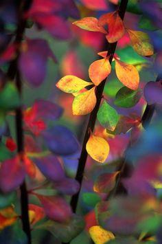 True Color Experts ™ in den VanDusen Gardens - Garten Herbst Idee Action Painting, Happy Colors, True Colors, Amazing Nature, Amazing Art, Fall Wallpaper Tumblr, Garden Nursery, Arte Floral, Colorful Wallpaper