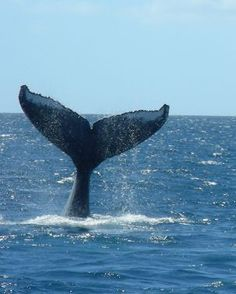 $29 Whale Watch Excursions| Hawaii Whale Watches|Specials Whale watching|Free Children Activites in Maui