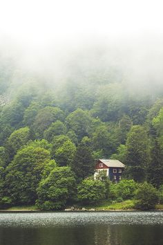 cottage in the wood