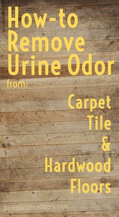 Now I can think about possibly getting a cat! How-to Remove Urine Odor from: Carpet, Tile  Hardwood Floors