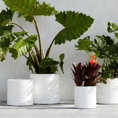 In a white finish, our surprisingly lightweight Grid Planters make for a cohesive look when clustered together — and feel free to play with mixing and matching sizes.