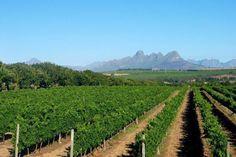 Du lịch Nam Phi - Là một đất nước được thiên nhiên ưu đãi. Trong rừng đủ thú hoang, dưới biển đủ loài hải sản giá trị, dưới lòng đất có tất cả những kim loại, quặng; từ kim cương, vàng, bạch kim đến titanium, tanzanite, đồng... Trên mặt đất có còn rất nhiều vườn nho, tạo nên một nền công nghiệp vang nổi tiếng từ 300 năm qua với khoảng 340 lò sản xuất. Riêng ở khu vực quanh Cape Town đã có hơn 100.000 ha chuyên trồng nho làm ra đủ các loại vang.