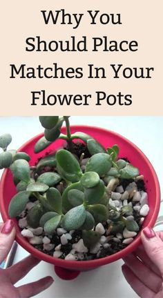 Garden Ideas To Make, Diy Garden Projects, Veg Garden, Garden Pots, Gardening For Beginners, Gardening Tips, Diy Backyard Fence, Patio, Flower Pots