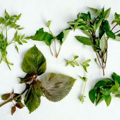 """Herbs used in Vietnamese cooking.  These should be on my """"Things I Love"""" board, too!"""