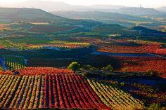 As far as the eye can see  Viñedos en La Rioja, España.  Vineyards in La Rioja, Spain.