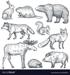 Set of hand drawn animals of europe Royalty Free Vector , Animal Sketches, Animal Drawings, Gcse Art Sketchbook, Rabbit Vector, Feather Vector, Watercolor Poppies, Drawing Frames, Black And White Flowers, New Zealand