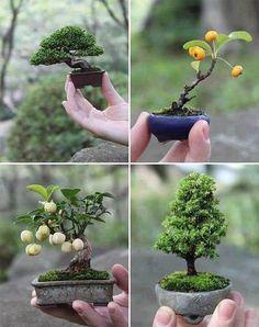 If you thought bonsais were already small enough, here are mini bonsais.
