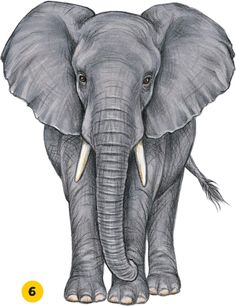 ELEPHANTHigh Risk One of the largest beasts of the animal kingdom, an African elephant has a thick trunk, big legs, long tusks, and giant ears! - Selection from Animals [Book] Easy Elephant Drawing, Elephant Sketch, Elephant Artwork, Elephant Drawings, Elephant Paintings, Elephant Watercolor, Indian Elephant, Elephant Love, Animal Sketches
