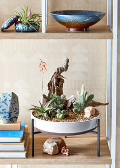 9 Dish Garden Projects That Bring the Outdoors Inside - Simple Ways to Bring Outdoors Inside - IDeas, Plans, Tips Indoor Cactus Garden, Succulent Gardening, Succulents Garden, Indoor Plants, Cactus Garden Ideas, Cactus Terrarium, Cactus Cactus, Decoration Cactus, Decoration Plante