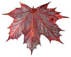 Sugar Maple Ornament, Copper