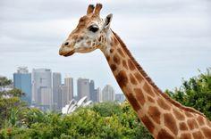 Sydney, Australia | Global Traveler