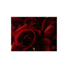 ❤ liked on Polyvore featuring backgrounds, flowers and red