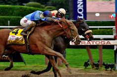 V.E. Day (USA) 2011 Ch.c. (English Channel (USA)-California Sunset (USA) by Deputy Minister (CAN) 1st Travers S (USA-G1,10f,Saratoga) (photo: Dan Heary)