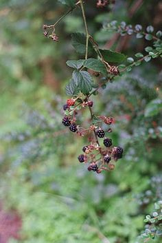 Pick blackberries in the hedgerows and forget about the world