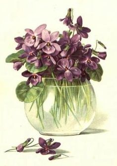 Violet - The Aquarian flower  This is what we used to pick you for mothers day!!