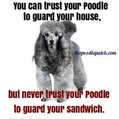 YOU CAN TRUST YOUR POODLE TO GUARD YOUR HOUSE BUT NEVER TRUST YOUR POODLE TO GUARD YOUR SANDWICH