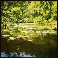 #millpond #lake #green Instagram 820sue