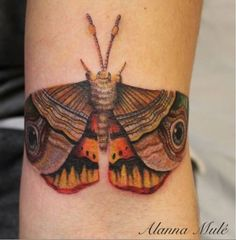 Color Realistic Moth Tattoo by Alanna Mule