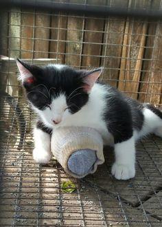 Kitten hugging frozen water bottle