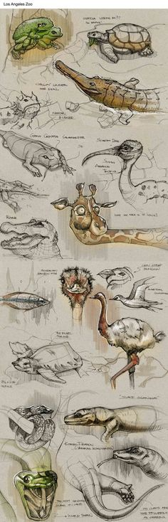 Sketches by Della Tosin, via Behance: