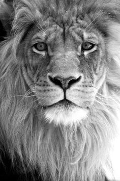 Black and white. Looks so awesome.