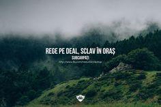 Pur românesc Romania, Favorite Quotes, Words, Nice, Nice France, Horse