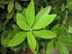 مقاومة النباتات للملوحة
