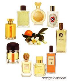 A perfect combo of citrus and floral, orange blossom: Hyde Park, ELDO Cologne, Sofia, Fleurs d'Orangeur, APOM Femme, Tarifa, Entre Naranjos, Seville a l'Aube, and Battito d'Ali. #niche #perfume #luckyscent