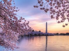 There's nothing quite like catching the cherry blossoms in full bloom along DC's Tidal Basin. Visit the nation's capital this spring and enjoy the breathtaking beauty of the National Cherry Blossom Festival.