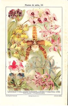 Houseplants Orchids Botanical Chromolithograph Print