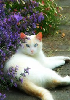 Great Free cats and kittens white Style Whenever you get a fresh kitten straight into your home, it is an exhilarating time, along with for some anim Cute Kittens, Cats And Kittens, Ragdoll Kittens, Bengal Cats, Kitty Cats, Pet Cats, Cutest Animals On Earth, Cute Animals, Rescue Dogs