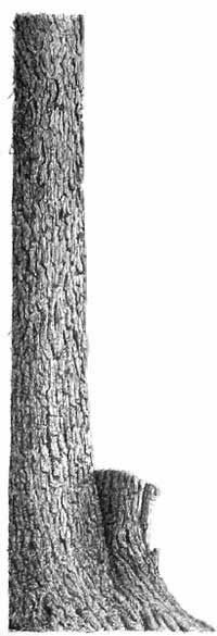 Pen and Ink Drawing Tutorial – How to Draw Bark
