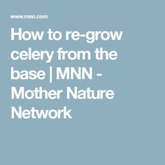How to re-grow celery from the base | MNN - Mother Nature Network