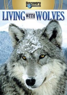 Living with Wolves/Wolves at Our Door Image Entertainment http://smile.amazon.com/dp/B000LPS2TA/ref=cm_sw_r_pi_dp_gtZrub0CXENKB