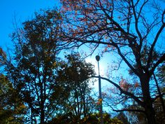 Buchanan Park is always so pretty in the fall.