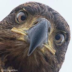 favorite animal: fierce, direct expression