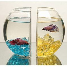 """But no plants and tooooo close to the other male, and there aren't any plants. It the betta over stresses, you'll loose. Good inch or two off those beautiful find. Please tell me how this is the """"Pefect betta bowl. Aquarium Original, Glass Fish Bowl, Aquarium Fish Tank, Fish Tanks, Fish Aquariums, Turtle Tanks, Cool Bookshelves, Cool Fish, Beta Fish"""