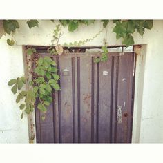 allyw / #InstaSize#door#vintage #instapic #instagood #instafamous #favorite #follow#followme#follow_me#fall#like#love #korea#iphone#saturday#mypic#goodphoto#삼청동#골목길 / #골목 #문 #식물 / 2013 09 29 /