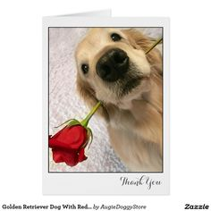 Golden Retriever Dog With Red Rose Thank You Card by #AugieDoggyStore