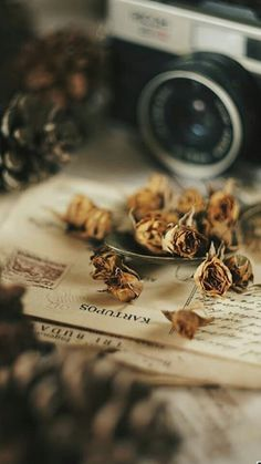 I want to share all sorts of wonderful things with you. Lots and lots of beautiful things. Autumn Aesthetic, Brown Aesthetic, Witch Aesthetic, Flower Aesthetic, Aesthetic Images, Aesthetic Backgrounds, Aesthetic Vintage, Aesthetic Photo, Aesthetic Wallpapers