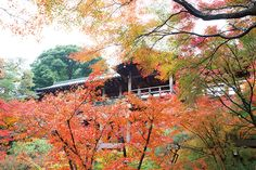 東福寺 緋色の雲に架かる天空の橋のよう - 朝日新聞デジタル&M