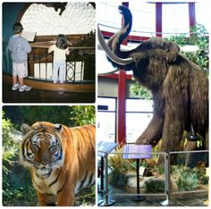 Awesome Day Trips around Kansas City -- animals, science, nature and history the kids will LOVE!