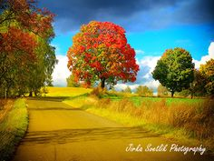 Colors of nature Landscape Road Floral Tree by DistinctyDesign