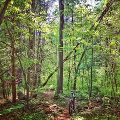 A twisty section of trail through the woods at Landlocked Forest in Burlington, MA.