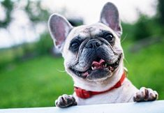 Your Local Family Store | UK's #1 Online Pet Supplies Portal- ZARDS