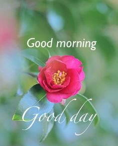 The best Good Morning images collected from all over the web that'll inspire your loved ones & uplift their mood. Good morning images, gifs, wishes, poems, wishes & more! Good Morning Tuesday, Good Morning My Friend, Good Morning Cards, Good Morning Friends Quotes, Good Morning Texts, Good Morning Picture, Good Morning Flowers, Good Morning Messages, Good Morning Good Night