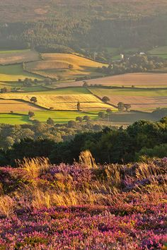 Late Afternoon Sun On Luccombe Church, Somerset, England